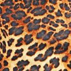 PUL poly print Leopard width 140cm (per 10cm)