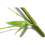 Le bambou pour les lingettes lavables